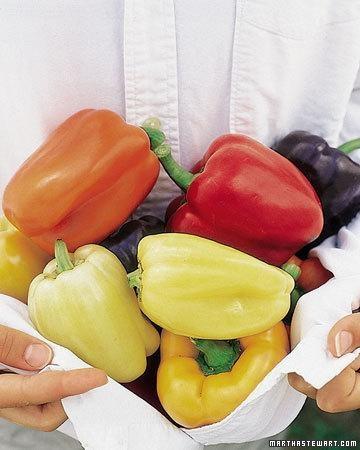 pestovanie-papriky
